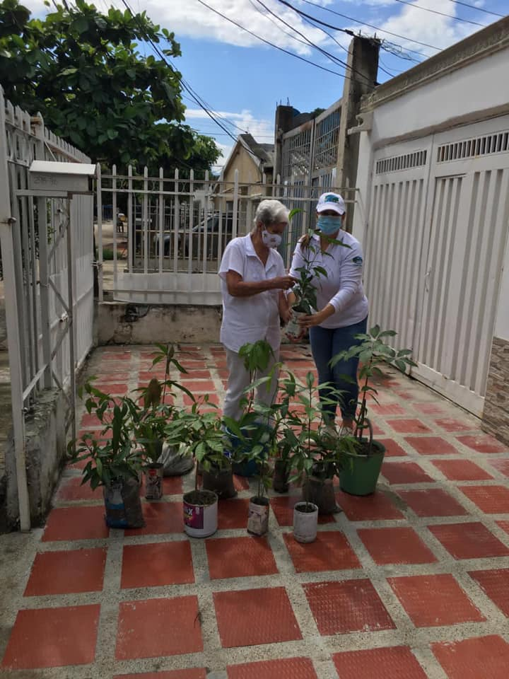 Corpamag lideró jornada de siembra de árboles en barrios de Santa Mart (2)